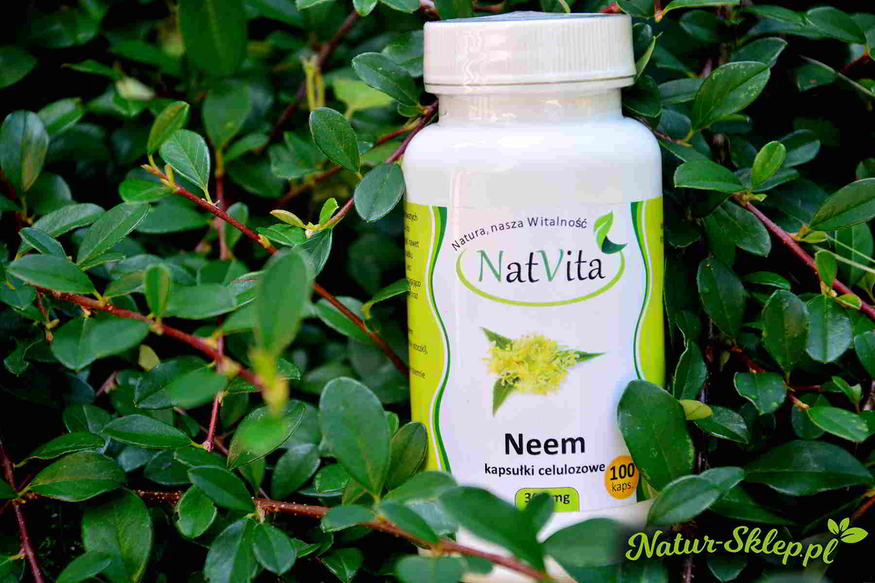 Kapsułki neem na tle roślin
